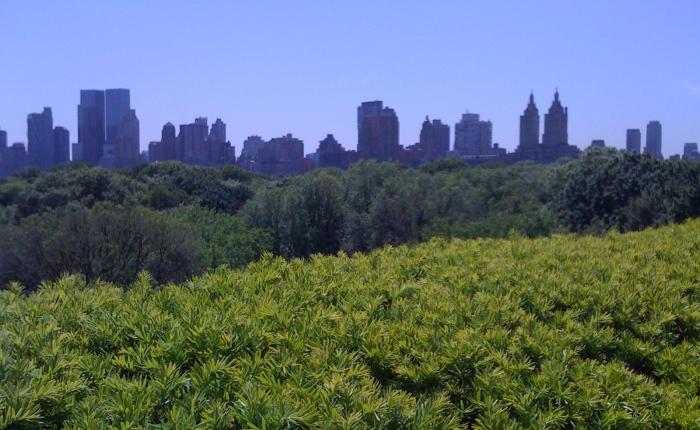 New York, NewYork